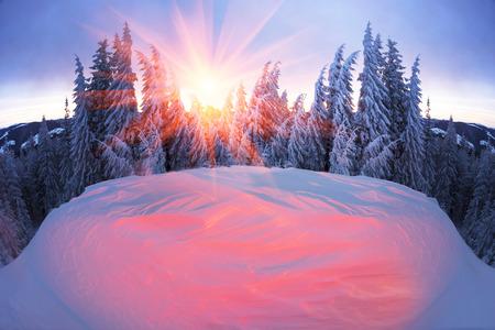 Ucraina, forte tempesta di neve dei Carpazi copriva le montagne di crosta di zucchero, come la glassa. Il delicato bagliore del sorgere del sole in un paesaggio decorato con un'immagine di selvaggia natura selvaggia