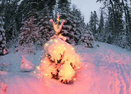 star path: Frosty winter night of Christening - magic light fairy lights on a snowy background in Alpine spruces forest after a snowstorm in the rugged mountains of Europe during the moon fairy
