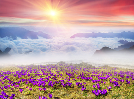 At dawn, after a warm rain ridges Chornogory haze enveloped with rays of sunshine. Sea fog in the pink light is very beautiful and fabulous, picturesque vague wave rolled on the slopes of the peaks Imagens