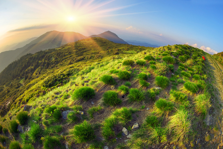 clumps of grass along the road resemble fairy cheerful hedgehogs climbing along the mountain road to the top of the Alps on the background of sunset. Beautiful colors picturesque.