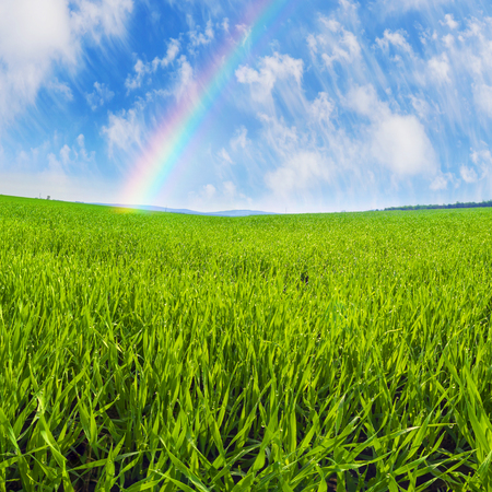 breadbasket: Spring warm air the sun warms the ground  begin to beautiful green field with a future crop of grain in Ukraines breadbasket bright beautiful young sprouts color emerald shines in the light