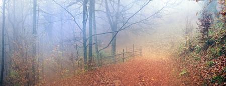 雨と霧の素晴らしく美しい - の背景秋のブナ林の Transcarpathian ウクライナ カルパティア山脈で魔法の風光明媚な色自然の野生の森林を有します 写真素材