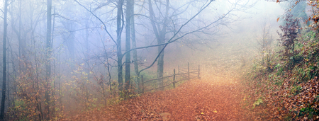 In the Transcarpathian Ukraine Carpathian mountains on the background autumn beech forests in the rain and fog fantastically beautiful - magical scenic color wild forests in natural reserves 版權商用圖片