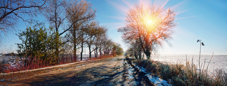 frost bound: After rain and fog frost bound Autumn grass in shining armor, a blade of grass - icicles on the ice against the backdrop of the forest beautiful colorful scenic shine sparks soon winter snow fall in Ukraine.