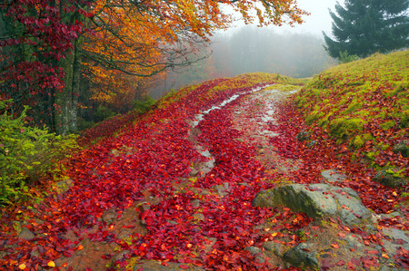 darken: Rain and showers in the Carpathian Mountains is filled roads and fallen beech leaves on the background of an alpine landscape in anticipation of cold weather. Beautiful paint soon darken.