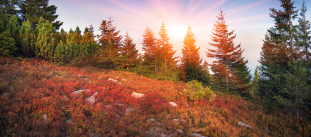 highland vegetation modest summer and unusually beautiful colors blooms in autumn, before cold weather. Blueberries, brusnika- bright red, coniferous forest green, orange buk- mountains sinie- fantastic charm. Stock Photo