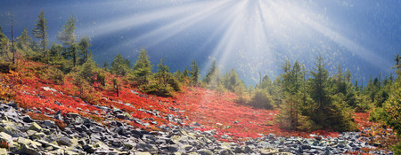 modest: highland vegetation modest summer and unusually beautiful colors blooms in autumn, before cold weather. Blueberries, brusnika- bright red, coniferous forest green, orange buk- mountains sinie- fantastic charm. Stock Photo