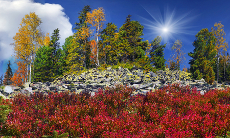 In the high mountains, among the wild forest golden autumn on the stone placers in the sunlight shining yellow and red leaves, blueberries and blueberry bushes, spruce green and white clouds
