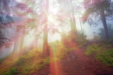 coolness: Alpine autumn, scenic sunrise in the beautiful Carpathian forest after rain shining colors and the freshness and coolness of the morning - will clear the new day and good weather after the storm Editorial