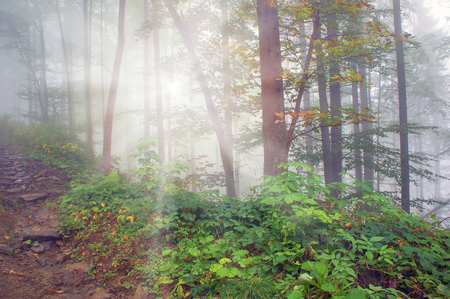 coolness: Alpine autumn, scenic sunrise in the beautiful Carpathian forest after rain shining colors and the freshness and coolness of the morning - will clear the new day and good weather after the storm Stock Photo