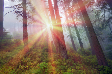 Alpine autumn, scenic sunrise in the beautiful Carpathian forest after rain shining colors and the freshness and coolness of the morning - will clear the new day and good weather after the storm Stock Photo