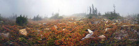 barely: In autumn the mountains are shrouded in thick fog that barely shine through Sun ... Blueberries, brusnika- bright red, coniferous forest green, orange buk- mountains sinie- fantastic charm. Stock Photo
