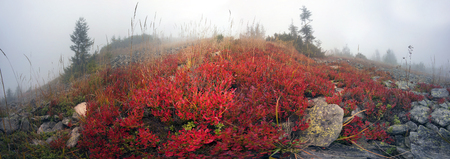 barely: In autumn the mountains are shrouded in thick fog that barely shine through Sun .Blueberries, brusnika- bright red, coniferous forest green, orange buk- mountains sinie- fantastic charm. Stock Photo