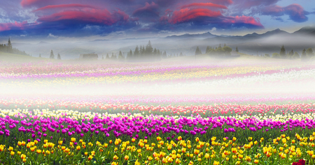 Field of tulips of different breeds on the backdrop of scenic wilderness
