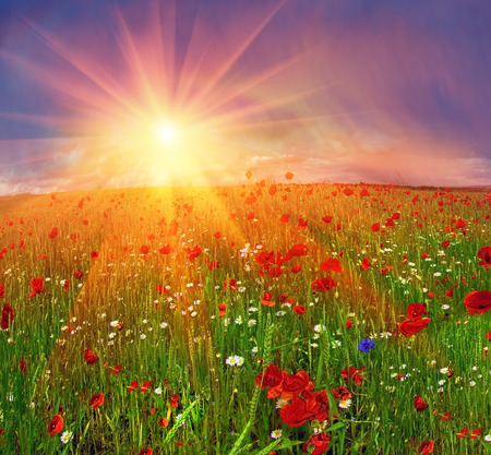 Field with bright blooming poppies in Ukraine Stock Photo