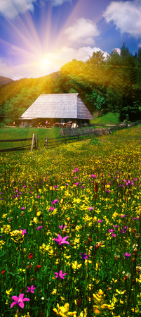 warmest: Carpathian Summer is the warmest and beautiful time of year, the abundance of flowers, clear lakes, lush alpine meadows of grass, fresh air attract people from cities. On the background of alpine meadows, filled with clean water - the first summer flowers