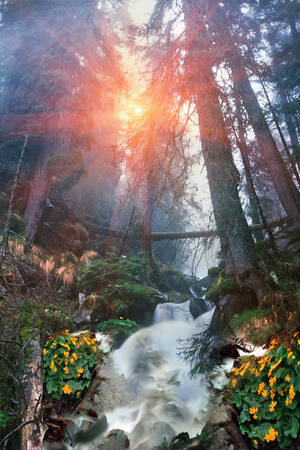 time flies: This time, spring break-favorite for alpine trips in the Carpathians, Ukraine. Under a mountain waterfall Bliznitsa-one of the most beautiful in the Carpathians. Rough water flies on hillsides