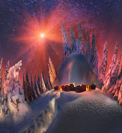 snowcovered: Climbing to tourist wild alpine mountain to an abandoned cabin-in order to illuminate the snow-covered spruce canopy during sunrise, sunset  to see show the first star of Christmas in the Carpathians