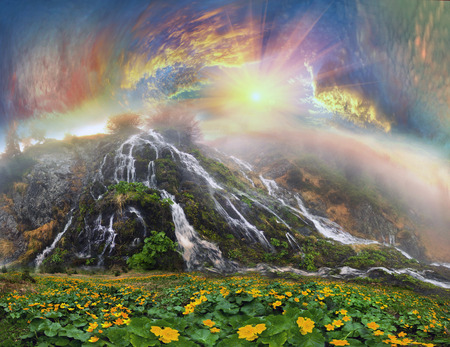 In the spring the snow melts in the Carpathians flowers bloom luxuriantly Light of dawn harbor flower meadow misty veil, creating a mood of magic and the mystery. Unique show attracts tourists and travelers