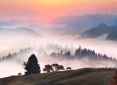 freely: Foggy morning in the beautiful Alpine peaks and valleys of gold leaf fall in October, when the first cold coming from the north ... The horses roam freely in the pasture in the clean mountain in Eastern Europe Stock Photo