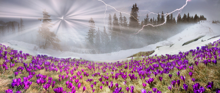 In March-April after a winter in the mountains of unstable weather, and replaced by the warmth, the sun can come quickly alpine cold, strong wind and sleet and then freezing plants and flowers 版權商用圖片