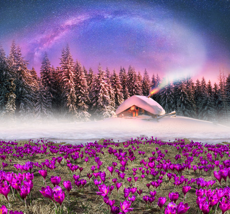 Fantastic landscape, symbolizing the unity of the spring and winter, on the fairy tale Twelve Months. Severe cold and gentle and krokusy- snowdrops, first in the mountains Stock Photo