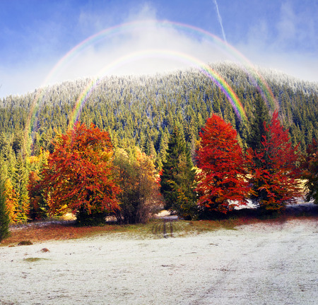 Autumn forest under first snow on Polonyna Lakers on the background of wild mountains above the lake Synevir. At night, the rain turned into snow, but quickly melts in the autumn sun