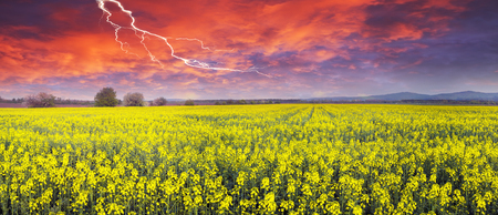 In the Chernivtsi region of Ukraine near the mountains farmer grows canola European varieties. Organic farming on the background of modern technology the beauty of nature in spring - tableau  Stock Photo