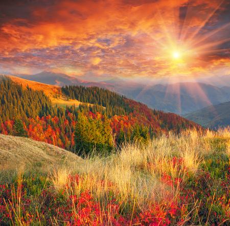 カルパチアの冷たい黄金色の秋はしばしば雪に変わり暖かい晴れた日にもう一度来ると。高い山脈と風光明媚な美しいブナ林の背景