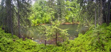 Mountain Lake in the wild taiga during heavy rain. Old wood on a background of magic and fairy tale, according to legend, the water, water and mermaids live, people do not have. Stock Photo