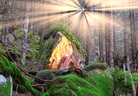 Illuminated dull gloomy alpine wild forest with beautiful green moss on rocks and stones scary roots in the Carpathian valley taiga landscape dawn in the rainy darkness