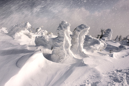 Strong winds in the alpine ranges of fabulous designs in the frozen pine trees create during a storm blizzard weather of the frozen ice and can freeze the tourists extreme mountain danger Stock Photo