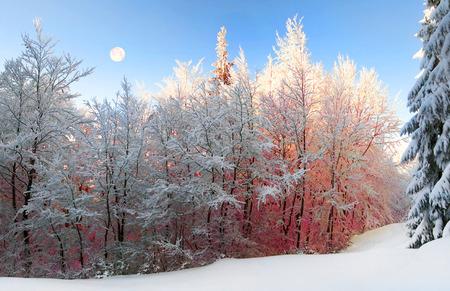Ucraino Carpazi foresta nevosa nel pomeriggio, e all'alba e al tramonto è bello e attraente. abete Snella e faggio lussureggiante incatenato dal gelo e brina, i raggi del sole creano bellezza Archivio Fotografico - 74291790