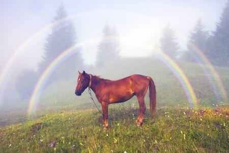 山中は、幸せのシンボル - 珍しい自然現象 - 霧虹特別な一種のハローを見ることができます。 霧と子孫天気の良い日に太陽の光の投影。