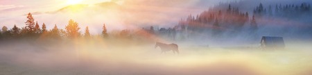 A horse grazes in the fog in the Carpathians. Grace domestic large mammal on a background of the beauty of nature in the summer in the mountains after the rain on the rising of the sun  the rainbow