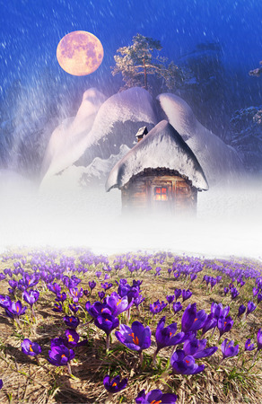 Fantastic landscape, symbolizing the unity of the spring and winter, on the fairy tale Twelve Months. Severe cold and gentle and crocus - snowdrops, first in the mountains