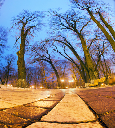 Night view original wet paving stones on the lights of the city at night Kiev in a foggy Mariinsky park shine golden lights and patterns of oak and chestnut branches in the blue sky