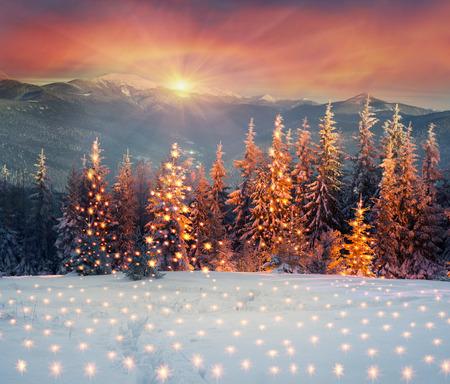 ウクライナ カルパティア山脈の壮大な光と霧の中で金色に光輝くのヘイズ、新年の黄金のスプルースを夜雪嵐ブリザード後のクリスマス ツリーの森