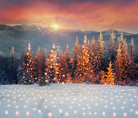night in the Ukrainian Carpathians, on New Years golden spruce, with a haze of golden light shine in fog with spectacular light effects Wild forest with Christmas tree after a snow storm  blizzard