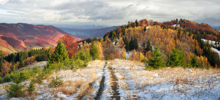 very cold: Cold autumn in the Carpathians. Bright colors after snow blizzard is very beautiful scenic, beech, birch and pine forests on the slopes of Sokilsky background mountains at dawn   sunset Stock Photo