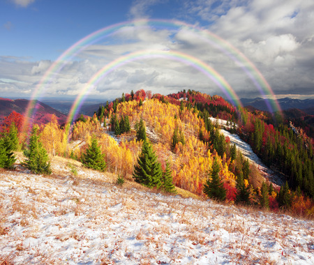 Cold autumn in the Carpathians. Bright colors after snow blizzard is very beautiful scenic, beech, birch and pine forests on the slopes of Sokilsky background mountains at dawn  sunset
