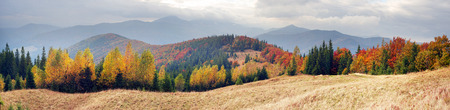 view of the Gorgan Hamster, Bruise, Javornik fall. Forest of beech and birch spruce beautiful colorful color after bad weather rain and snow on the background of picturesque mountains Stock Photo