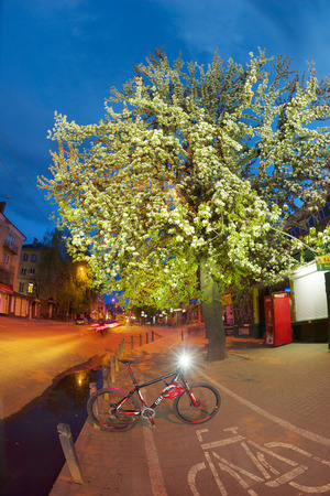 crab apple tree: Ukraine, Ivano-Frankivsk, May 14, 2017: tender evening in apple-tree pear trees, Ukraine. Bike tour along the cycle path against the backdrop of the night city. Clouds over the picturesque