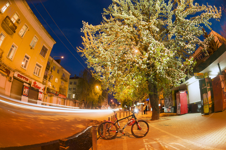 crab apple tree: Ukraine, Ivano-Frankivsk, April 15, 2017: tender evening in apple-tree pear trees, Ukraine. Bike tour along the cycle path against the backdrop of the night city. Clouds over the picturesque area Editorial