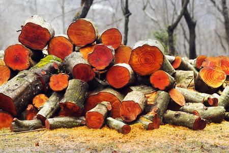 Tempo piovoso nebbioso e fumoso nella foresta carpatica sullo sfondo di un ceppo di legna da ardere di ontano. Anelli annuali di bella struttura di rosso arancio di legno deciduo valutato in mobilia Archivio Fotografico - 80419699