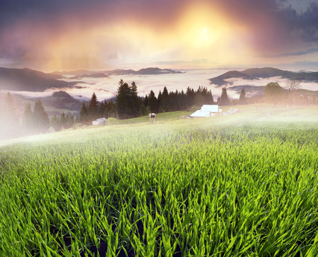 Mountain morning of Ukraine in the Carpathians transparent haze in the valleys sunrise gentle and fabulous. Houses of Ukrainian mountaineers Hutsuly on the polonins of Verkhovyna Stock Photo
