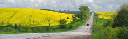 soviet flag: A gentle morning in the rapeseed fields, Ukraine. Symbolic colors are yellow-blue like the flag of the country, golden and heavenly. The old Soviet highway to the mountains of the Carpathians