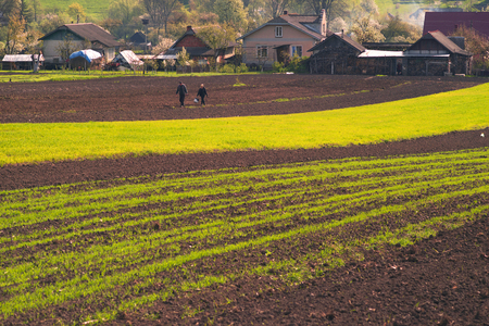 Spring Ukraine peasants cultivate the land of artistic compositions of fragments of land in  hills and arable land fresh greens of wheat germination crops on a background of flowering plant trees