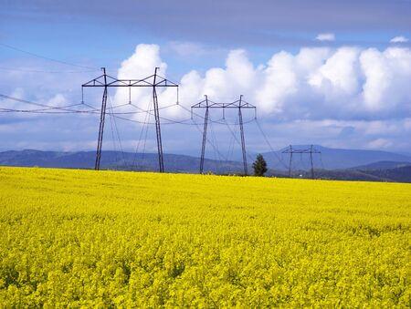 Een zachte ochtend in de koolzaadvelden, Oekraïne. Symbolische kleuren zijn geelblauw zoals de vlag van het land, goudkleurig en hemels. Vermogenstransmissielijn vanaf hoogspanningsstation