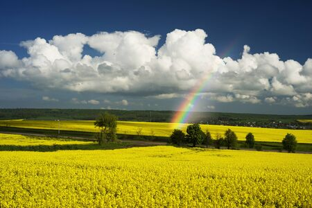 gentle morning in the rapeseed fields, Ukraine. Symbolic colors  yellow-blue like the flag of the country, golden and heavenly. Clouds over the picturesque area gather before the storm